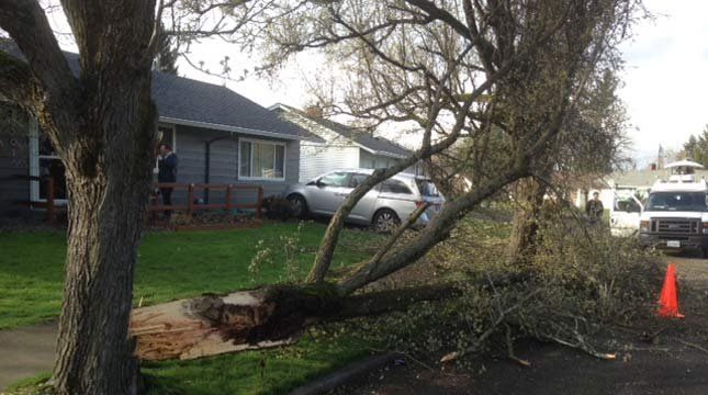 Tree down in north Portland on Tuesday.