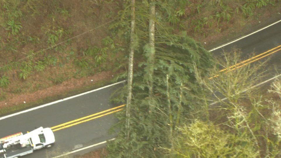 Tree knocked down during Tuesday's windy weather. Image from AIR 12.