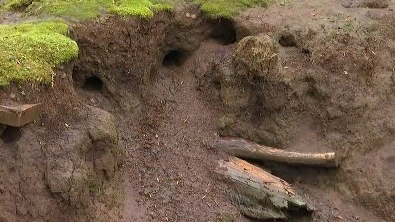 Rat holes behind the family's home in South Salem. (KPTV)
