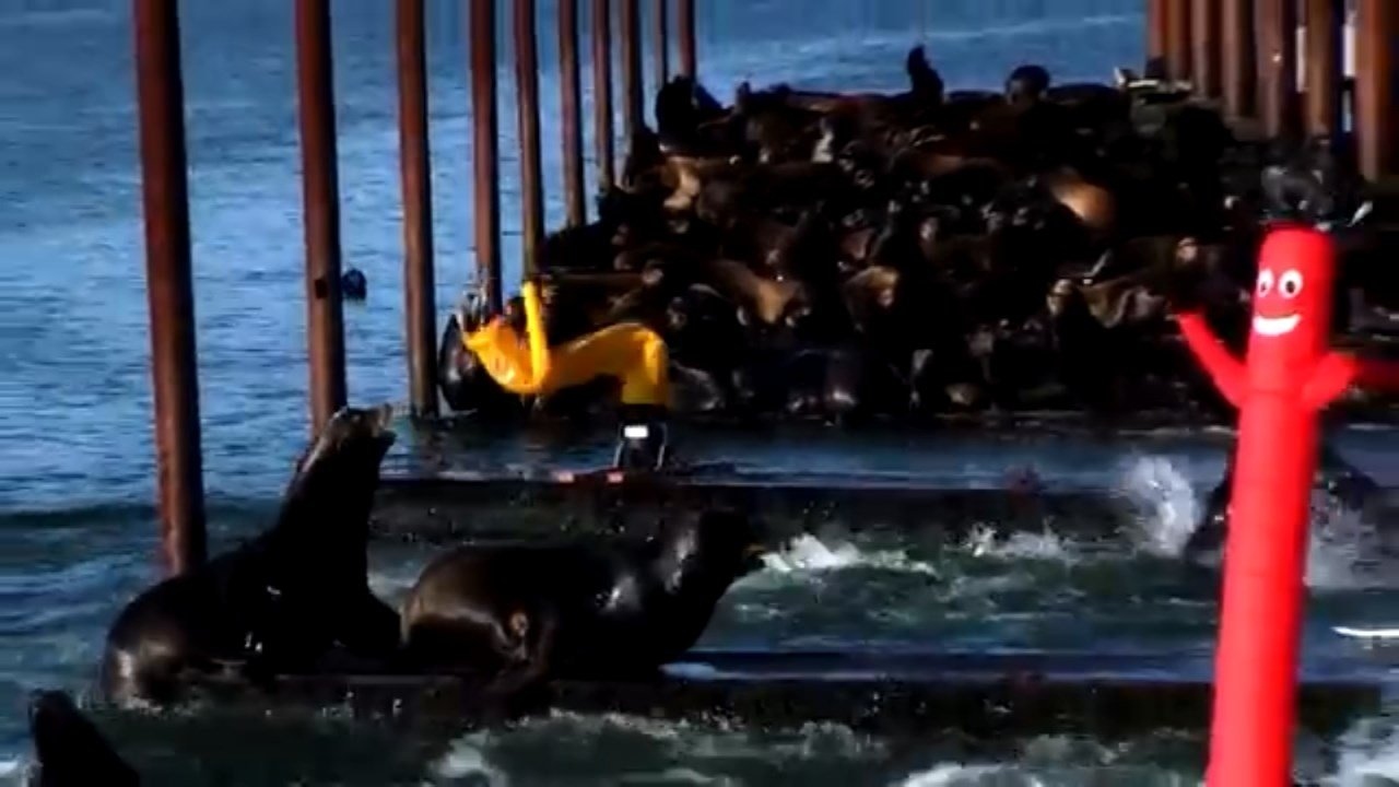 "Inflatable ""air dancers,"" typically seen around malls or car lots, are now being used to scare off unwanted sea lions on the Oregon coast."