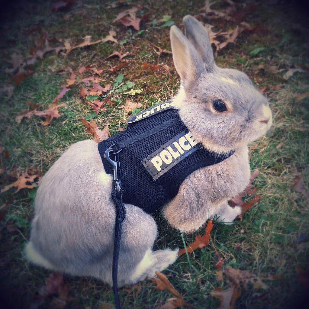 Courtesy: Portland Police Bureau Twitter