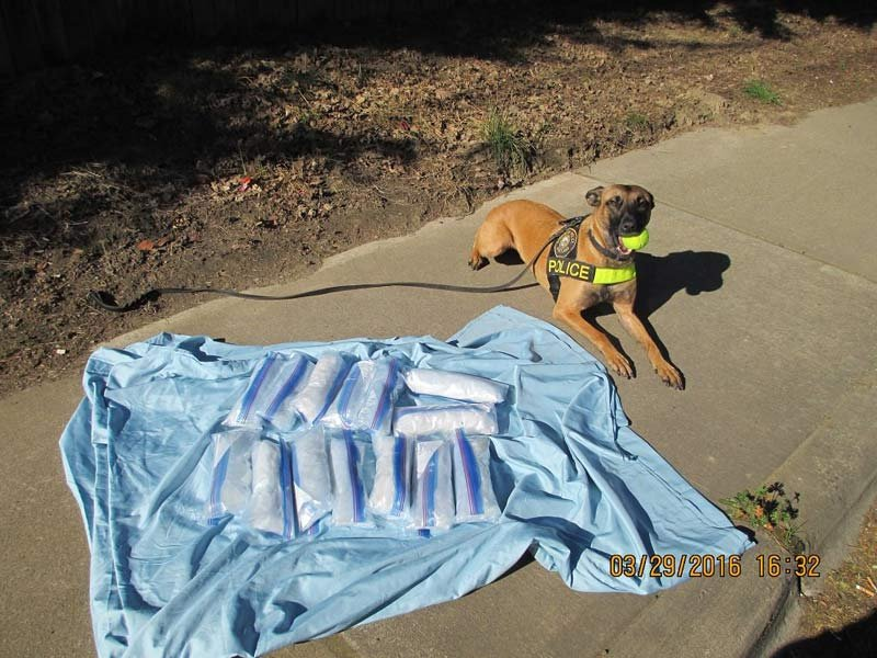 Portland K-9 Lola found 15 pounds of meth in the trunk of a car Tuesday. (Photo: Portland Police Bureau)