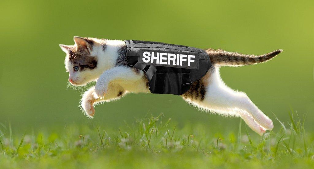 Courtesy: Washington Co. Sheriff's Office