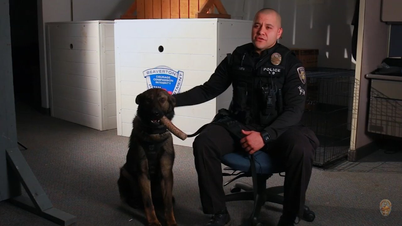 Officer Lutu and K-9 Malietoa. (Courtesy: Beaverton Police Department)
