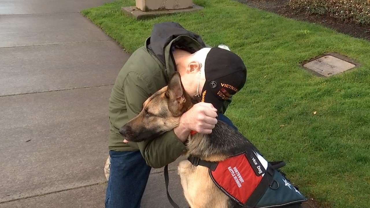 Service veterans can connect with the Northwest Battle Buddies to be paired with a service dog to help them feel more comfortable coming home. (KPTV)
