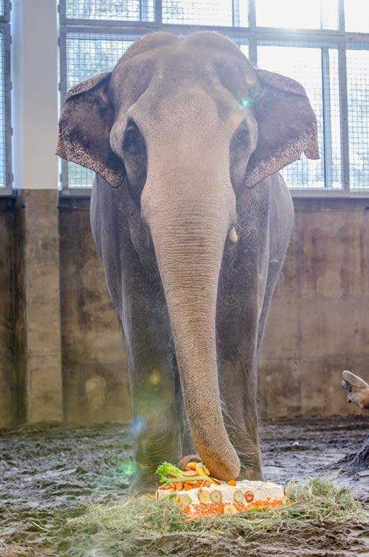 Packy's birthday cake was decorated with a variety of fruits and vegetables (Photo: Oregon Zoo)