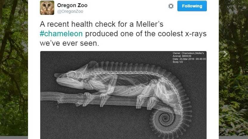 Screenshot from Twitter/@OregonZoo