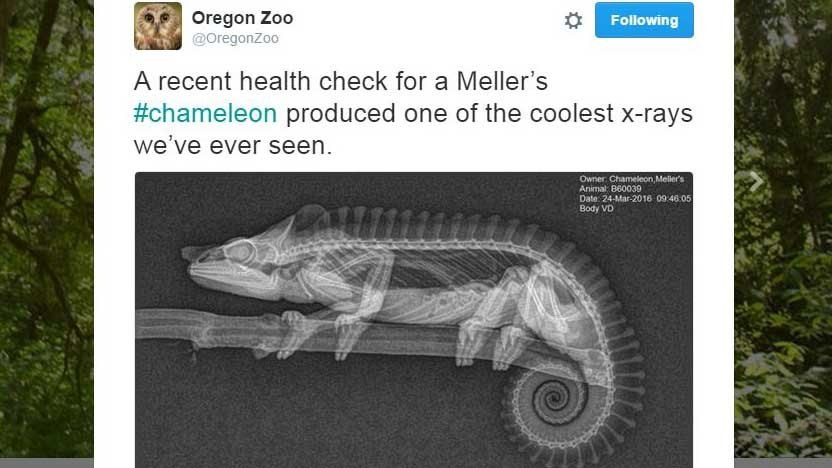 Screenshot from Twitter/@OregonZoo