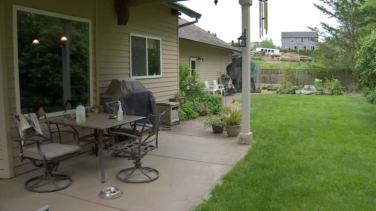 Jerry Farley's backyard where the cougar was spotted Monday night (KPTV)