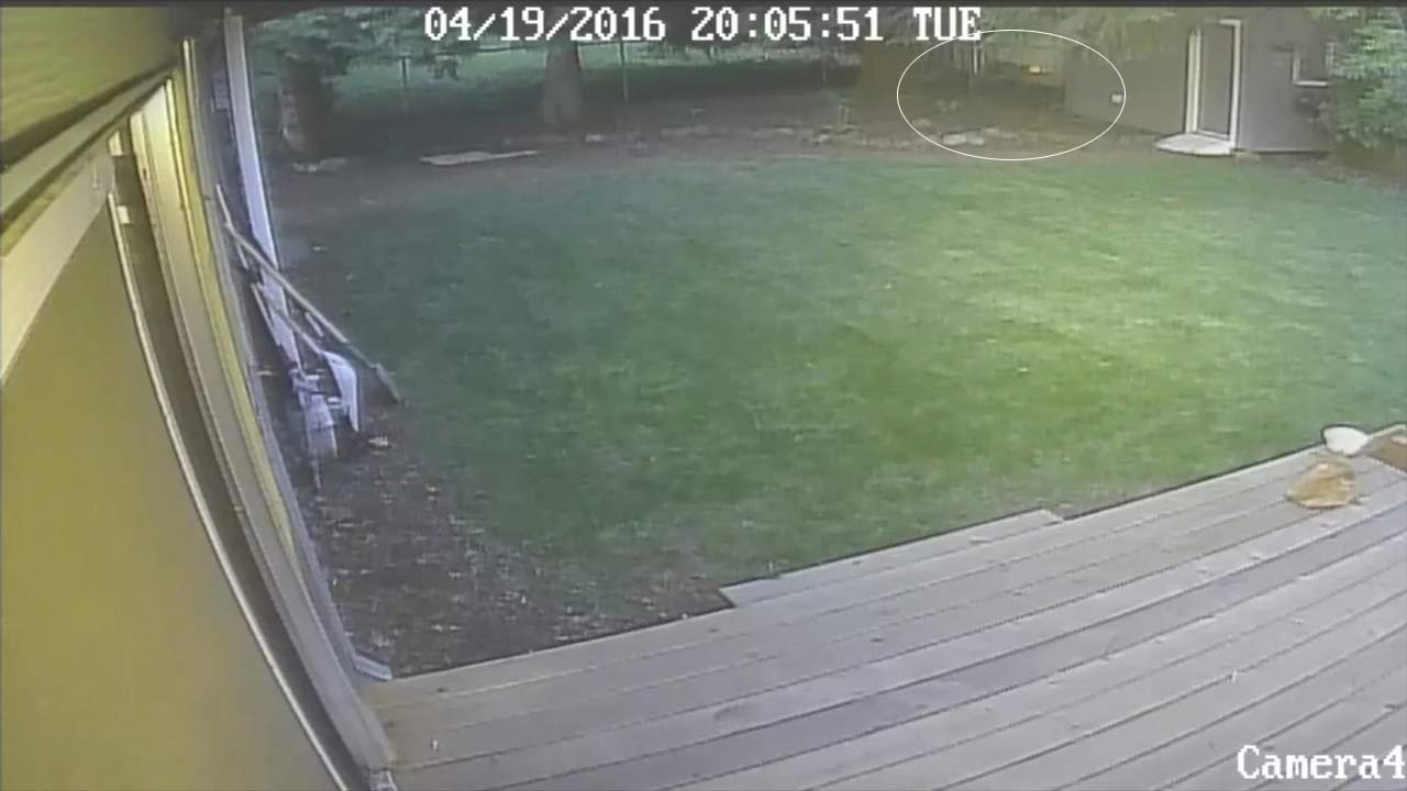 Surveillance image of cougar in backyard of Gresham home. (Viewer surveillance image/KPTV)
