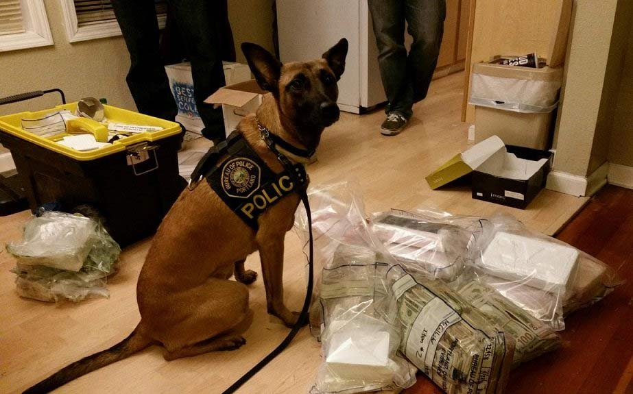 Portland drug K-9 Lola assisted in a major bust that led to the seizure of 14 kilograms of cocaine. (Photo: Portland Police Bureau)