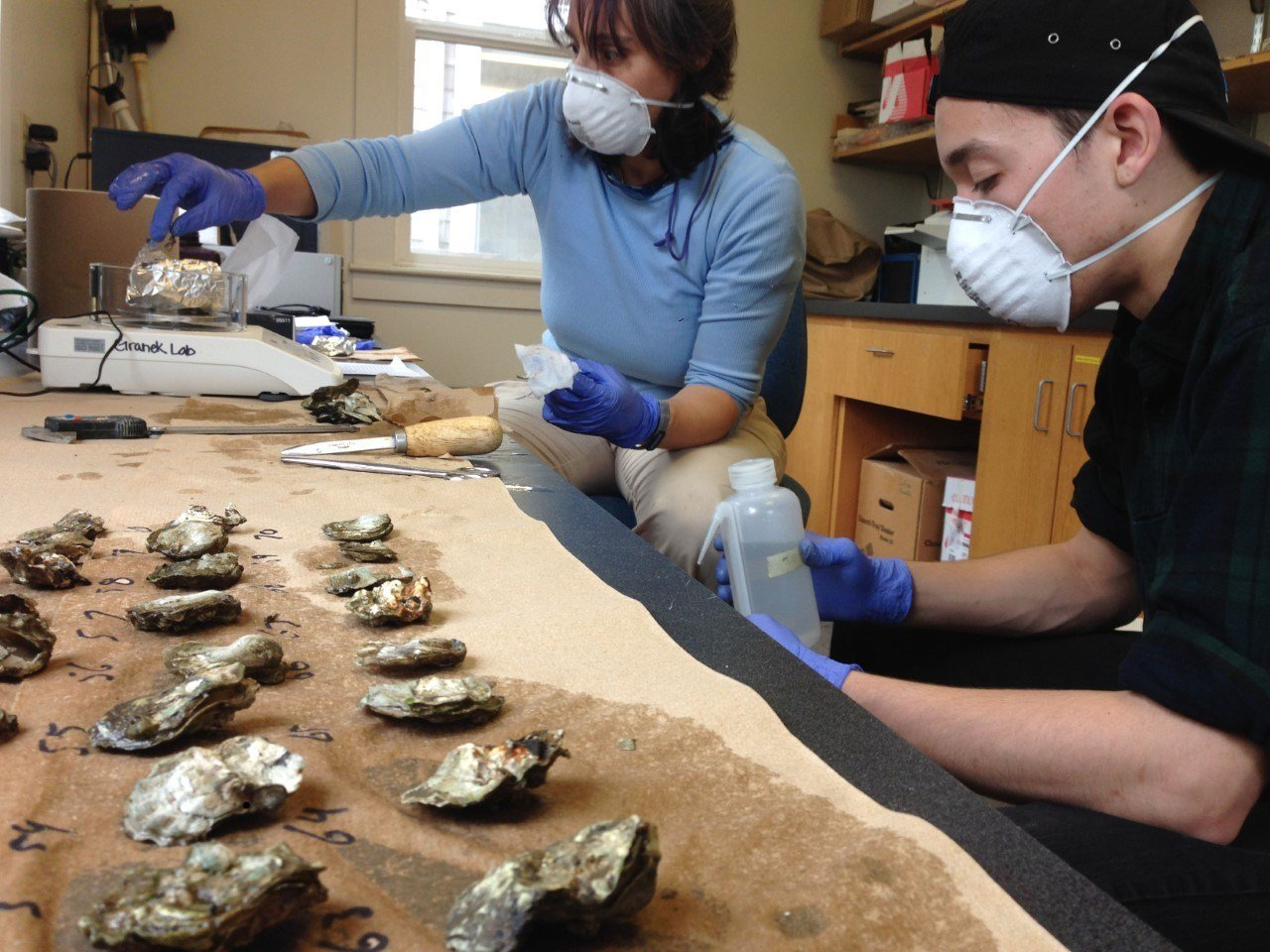 Researchers at PSU studying the Olympia oyster discovered a mixture of chemicals and pharmaceuticals in the specimens. (KPTV)