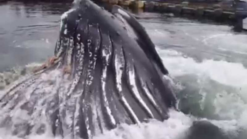 Screenshot of video from Facebook/Strike Zone Sportfishing