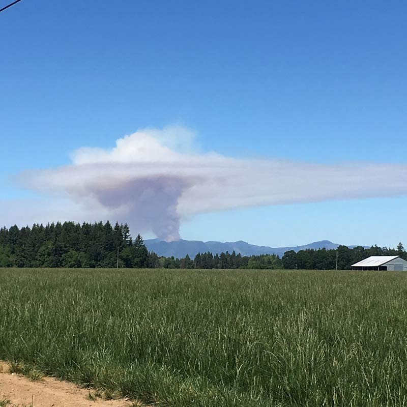 Viewer photo of controlled burn, taken in Hillsboro.