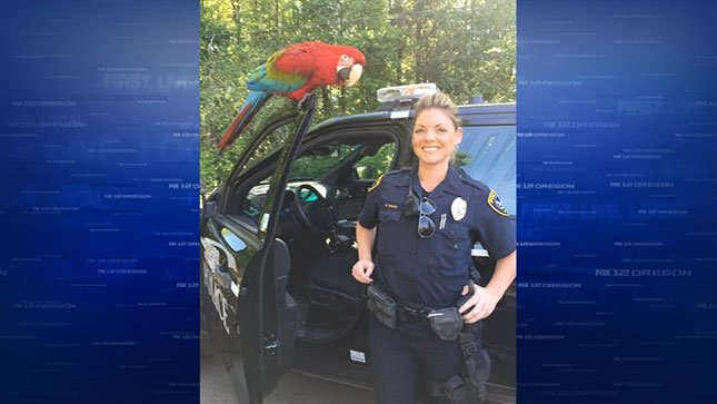 "Officer Mace poses with a parrot named ""Bird"" during a recent call. (Photo: Tigard Police)"