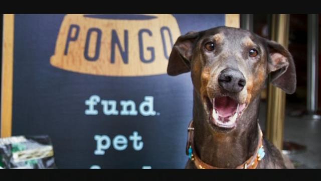 The Pongo Fund (KPTV)