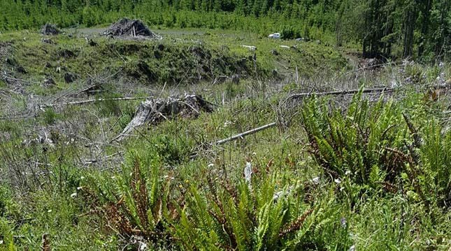 Area where two bull elk were killed and left to waste in Columbia County near Baker Point over the weekend. (Image: OSP)