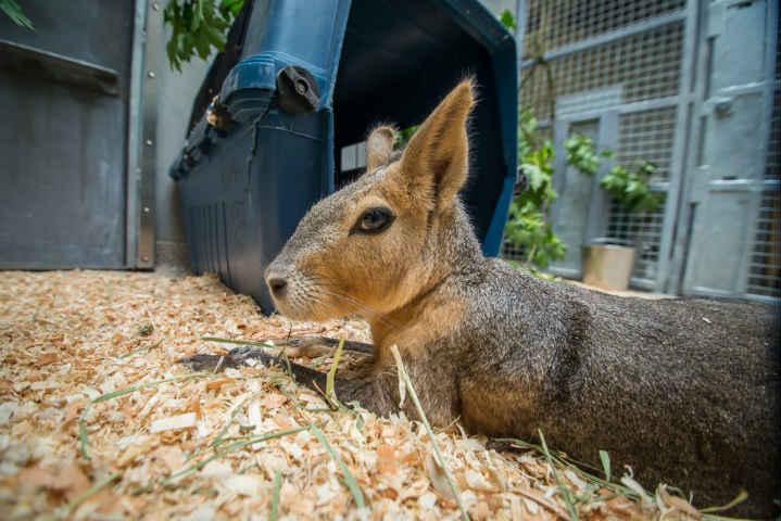 (Photo: Oregon Zoo)