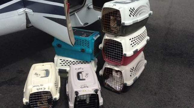 Photo courtesy: The West Columbia Gorge Humane Society