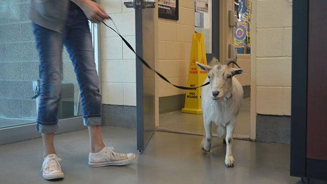 (Photo: Bonnie Hays Animal Shelter)