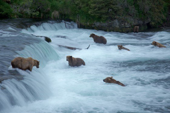 Photo: National Park Service, Katmai National Park