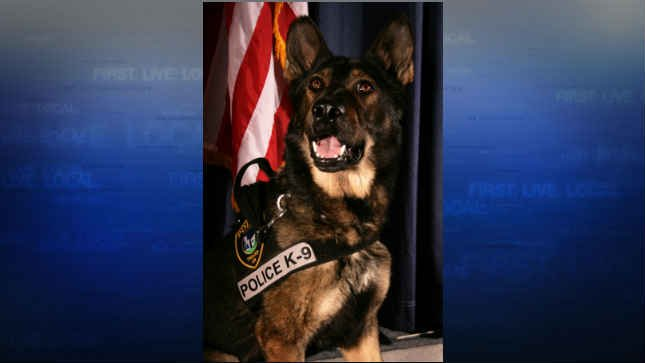 K9 Baxter (Photo: Tigard Police Department)