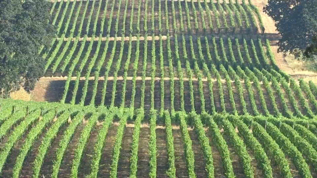 Vineyard at Stoller Family Estate (KPTV)