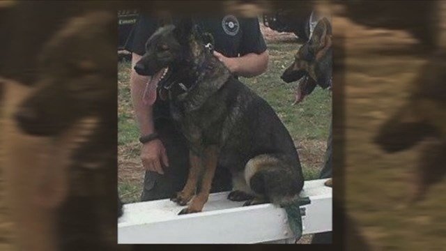 A deputy from Stephens County, Oklahoma, was fired after he left his K-9 partner in his empty cruiser for 36 hours, leading to the dog's death. (KFOR/CNN)