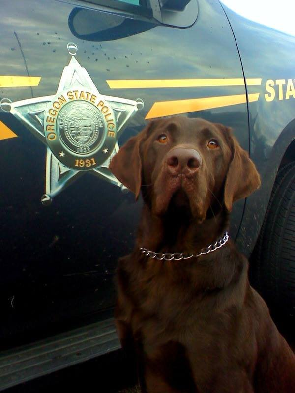 Hemi, a drug detection K-9 for Oregon State Police. (Photo: OSP)