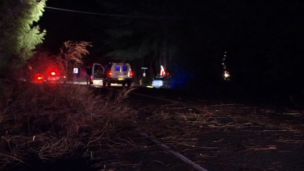 A boy died after a tree fell on a car in SW Portland in December 2014. (KPTV file image)