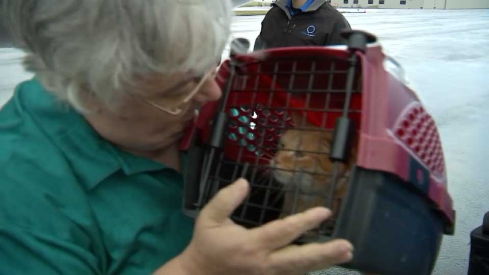 Volunteers with Oregon Friends of Shelter Animals were on hand to meet the animals as they arrived in Hillsboro Tuesday.