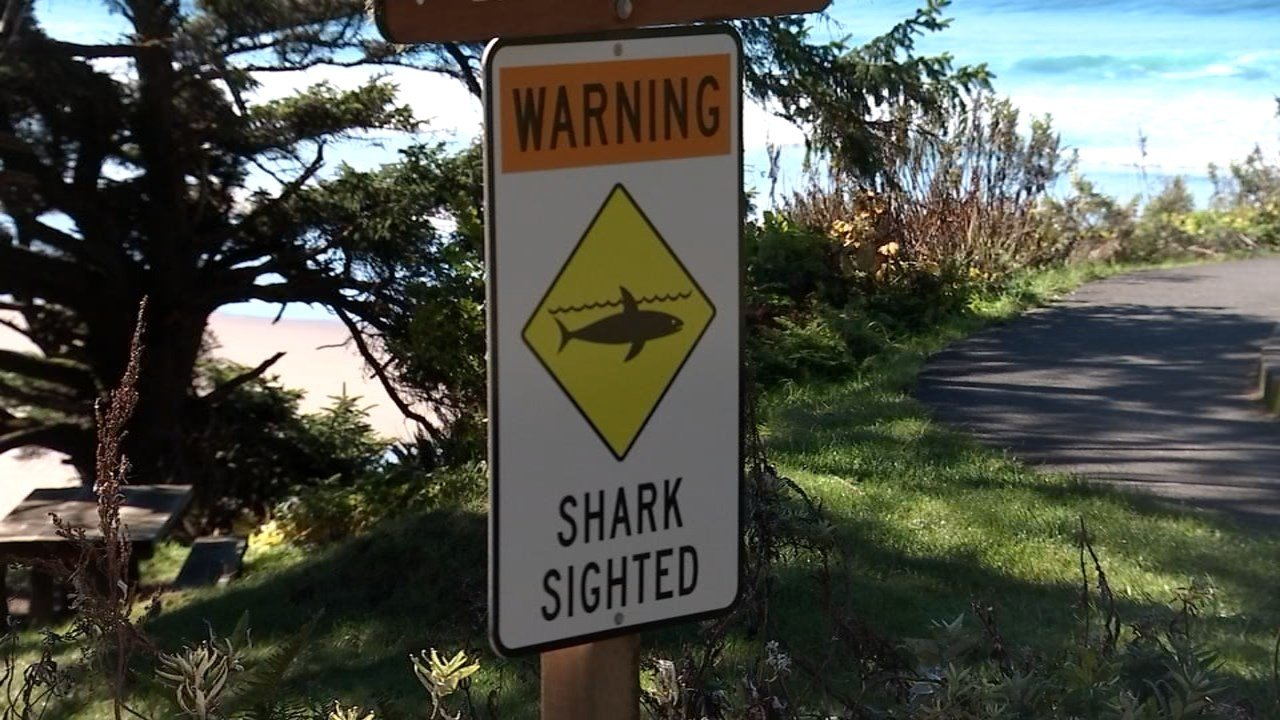 Shark sighting warning sign file photo (KPTV)