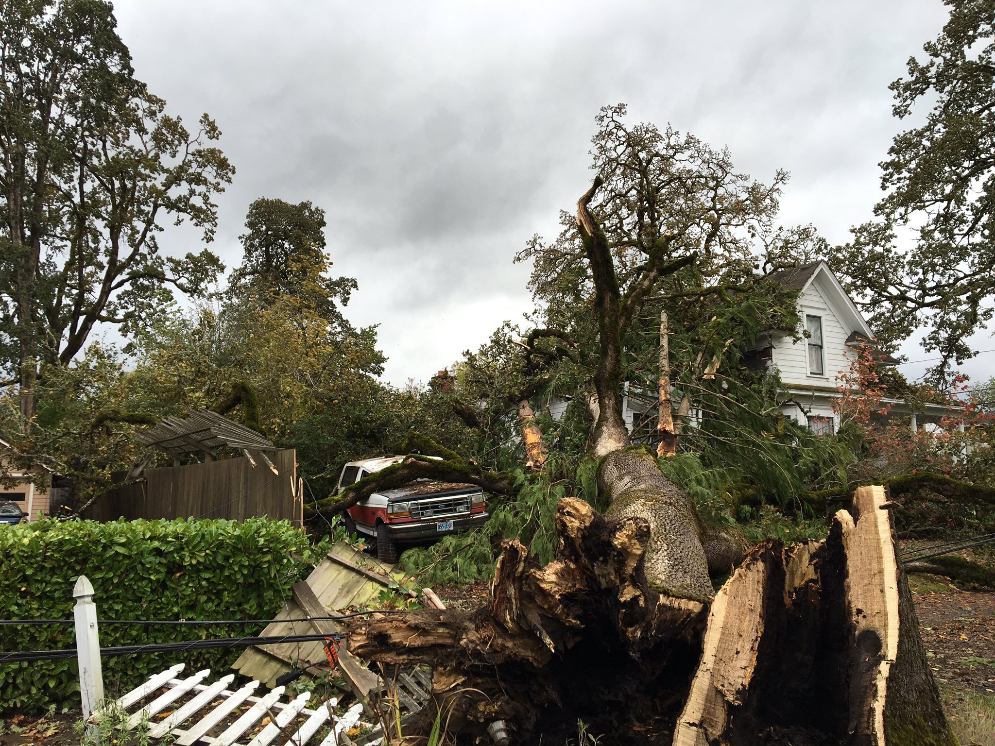 Firefighters said nobody was hurt when this tree fell onto a home in Forest Grove (Photo: Forest Grove Fire)