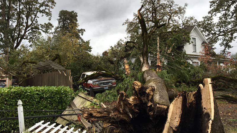 Cleanup underway at the Clume home in Forest Grove Monday, after a large oak tree came crashing down. (KPTV)