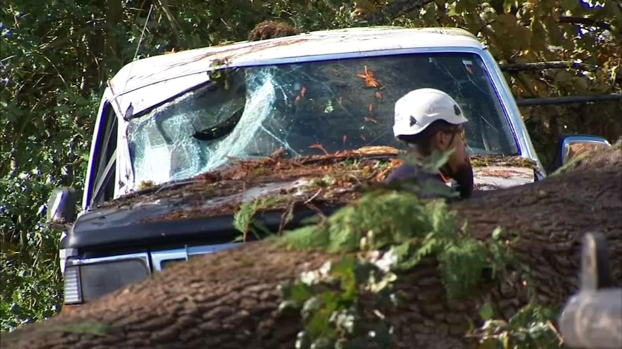 Forest Grove tree damage. (KPTV)
