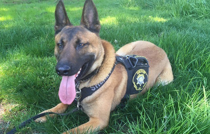 Missing K-9 Officer Radar (Courtesy: WCSO)