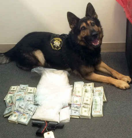 K9 Taz with drugs, cash and gun seized during the search (Courtesy: Washington Co. Sheriff's Office)