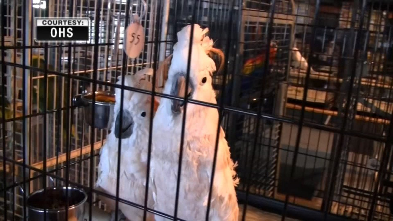 Photo of rescued birds. (Image: Oregon Humane Society)