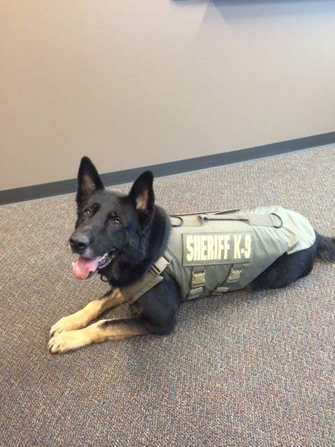 Multnomah County Sheriff's Office K-9 Ranger (Photo: Multnomah County Sheriff's Office)