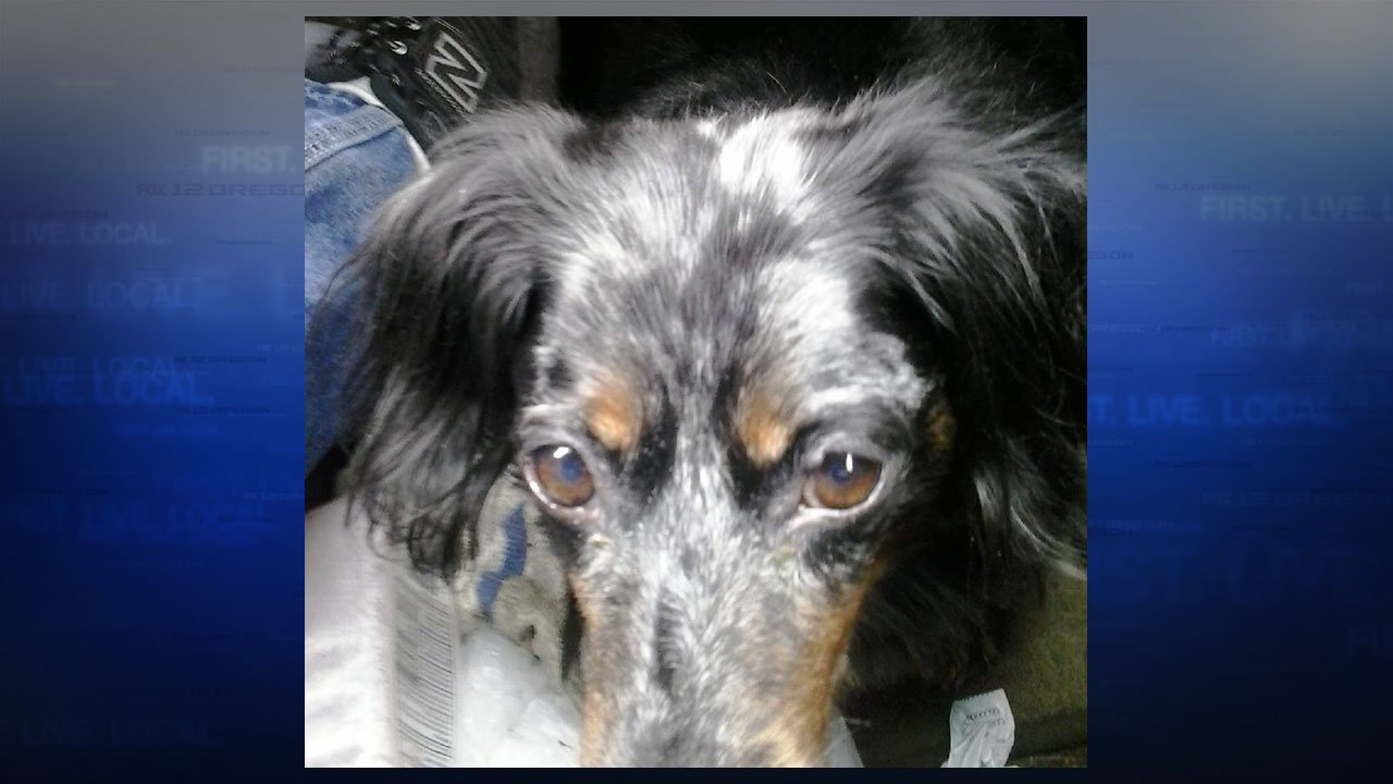 Deputies with the Clark Co. Sheriff's Office are searching for a missing semi-truck and trailer, as well as the pet Dachshund the driver had in the truck's cab. (Clark Co. Sheriff's Office)
