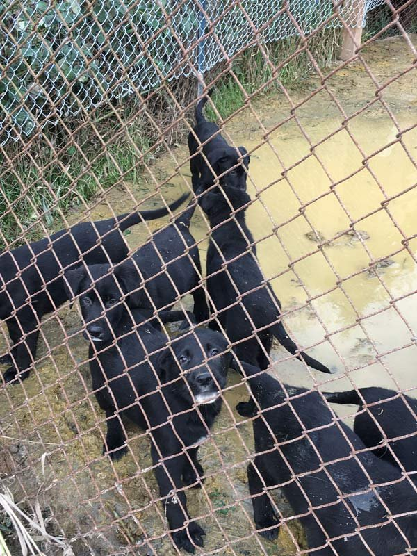 Dogs removed from breeding facility in Oregon City. (Photo: Clackamas County Sheriff's Office)