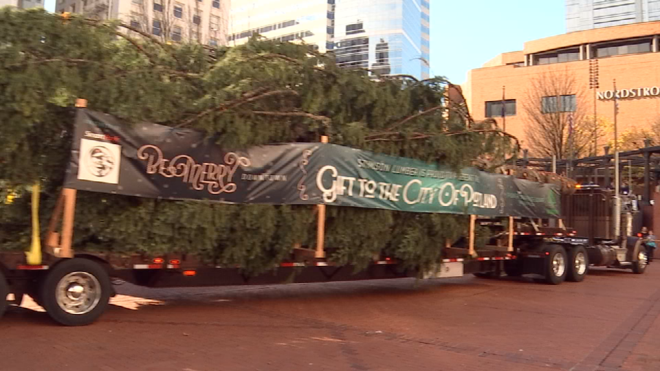 Stimson Timber Company donated the 75-foot-tall Douglas fir, which was grown near Gaston.