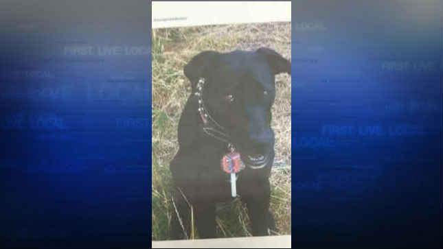 Kona the dog (Photo from Bill Robbins/KPTV)