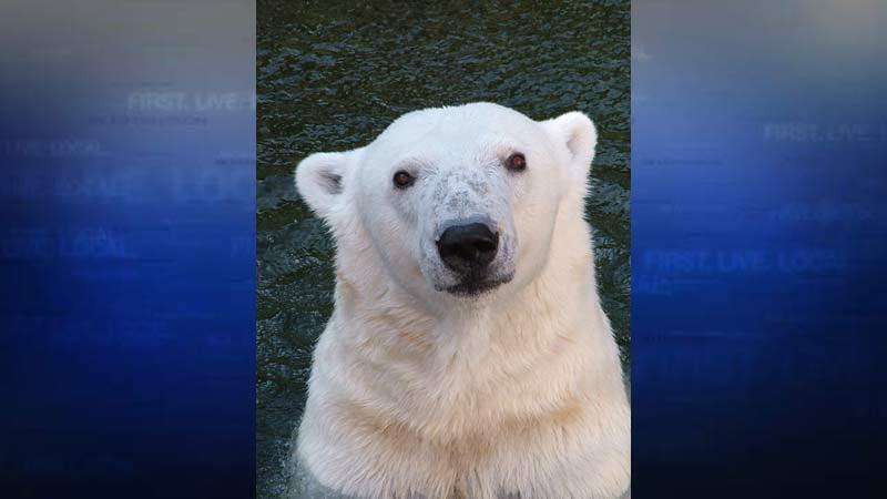 Polar bear Tasul (Photo: Oregon Zoo)
