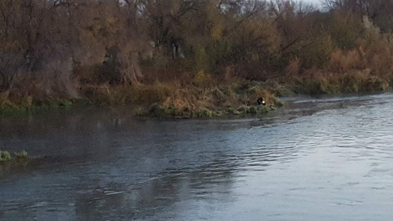 A man survived after being hit by a car, thrown off a bridge into the Snake River and swimming to an island. (Photo: Oregon State Police)
