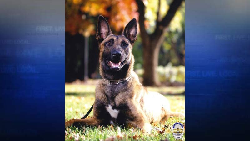 K-9 Buster (Photo: Keizer Police Department)