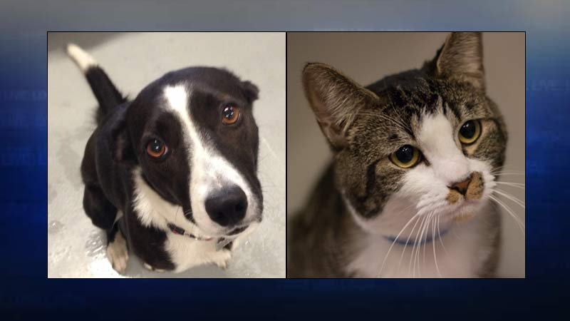 Photos: Multnomah County Animal Services