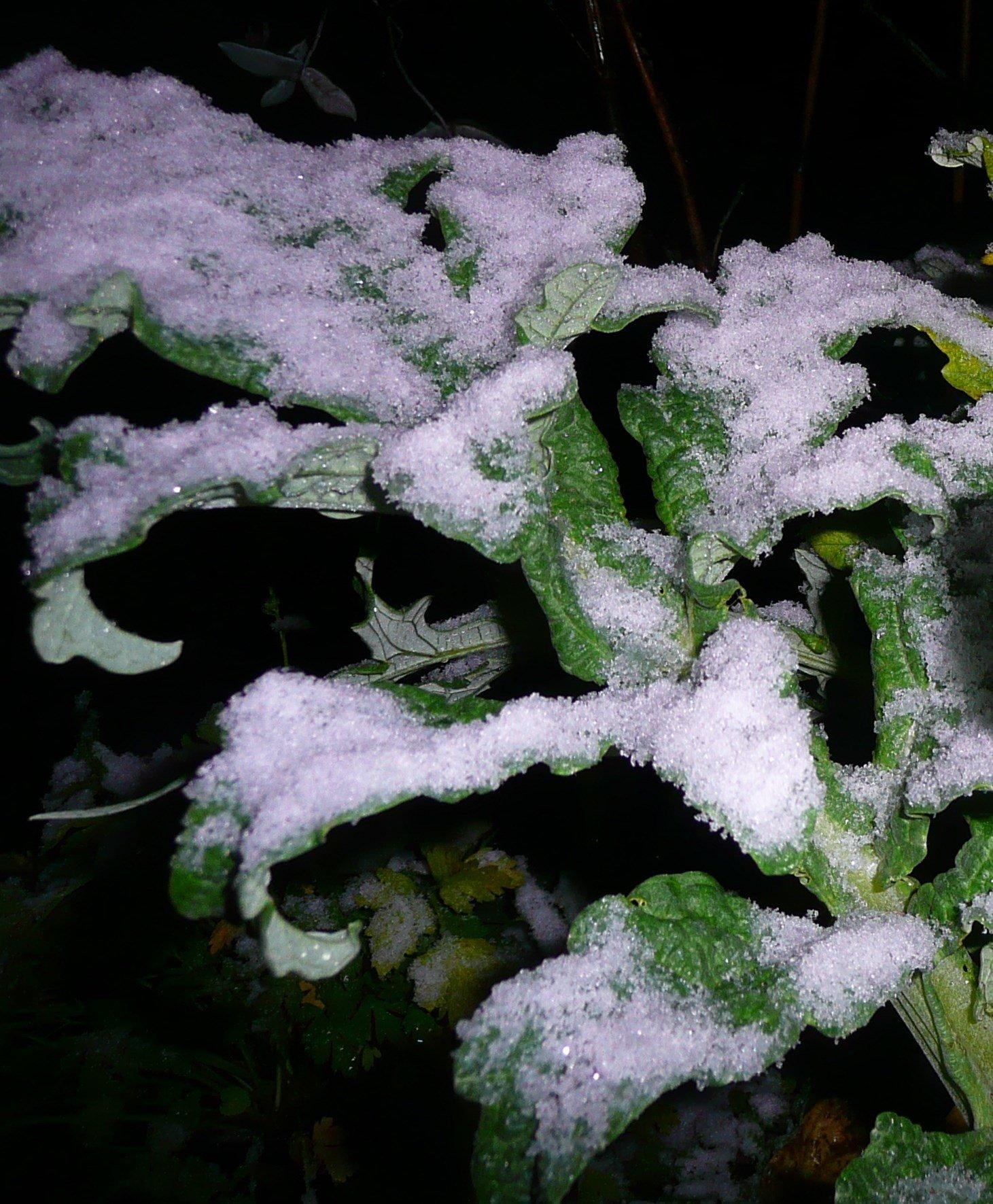 Snow near Skyline area (Courtesy: Cindy Clay)