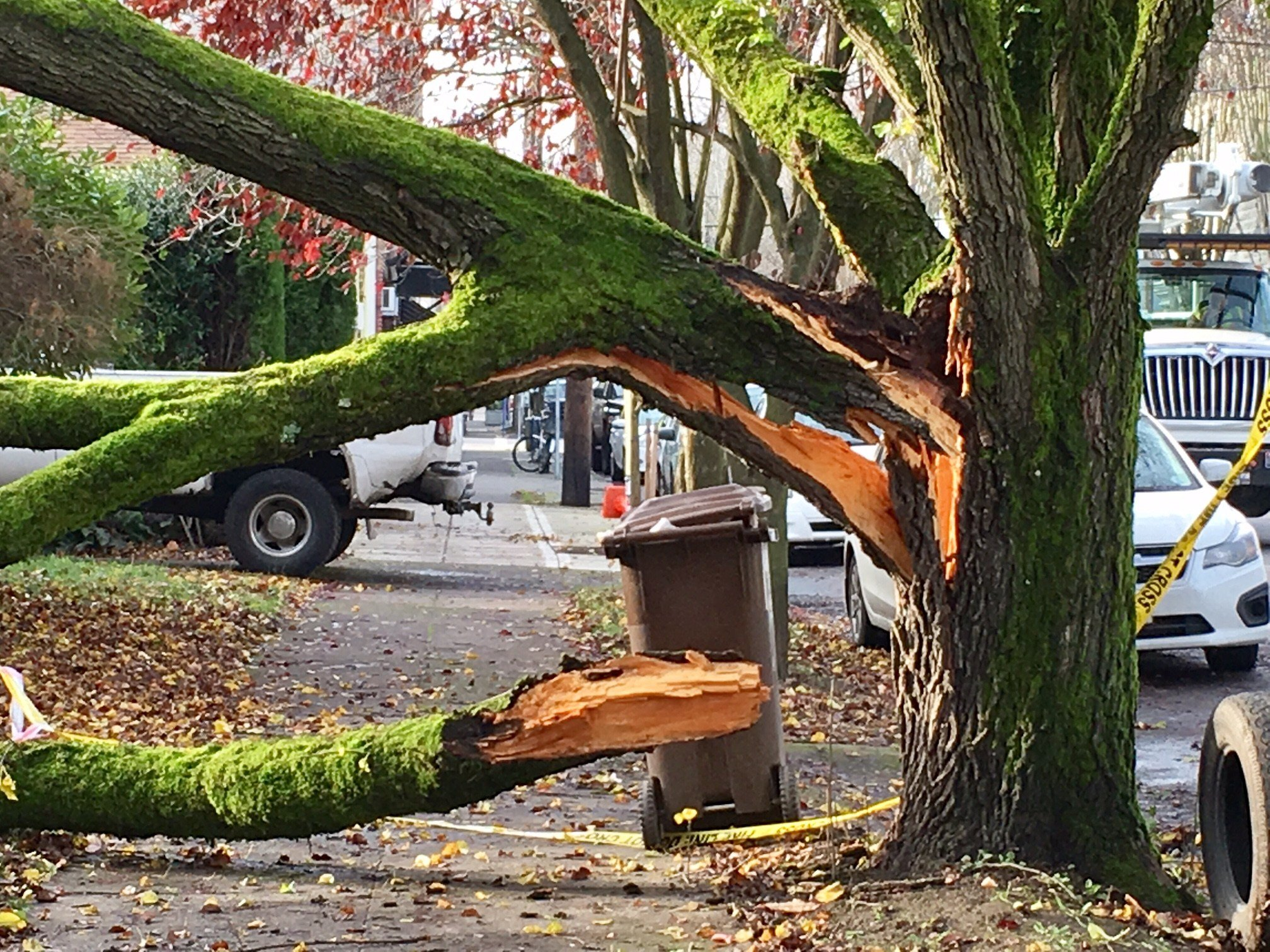 Some of the downed limbs crews worked to clear Tuesday.