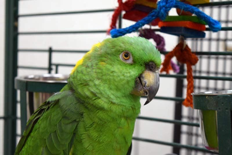 Photo: Oregon Humane Society